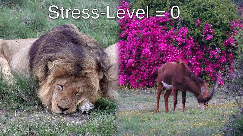 Jäger und Beute haben normalerweise Stress Level Null